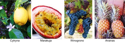 fruitsAHA.jpg