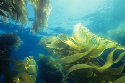 seaweed22.jpg