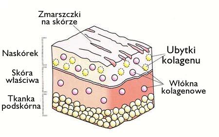 ubytek-kolagenu.png